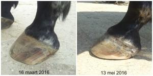 Zonan lv voor en na